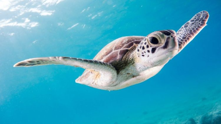 scuba-diving-tenerife-with-sea-turtle