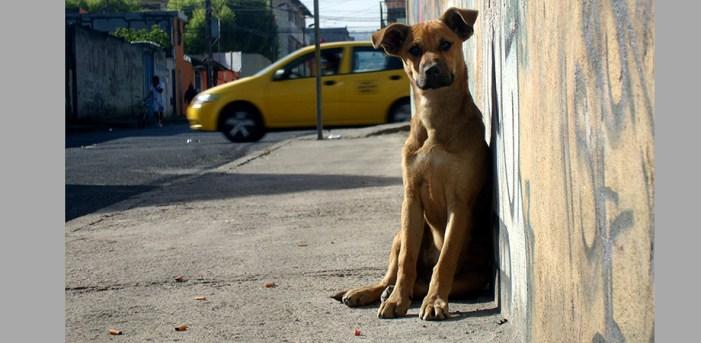 Aumenta cifra de perros abandonados