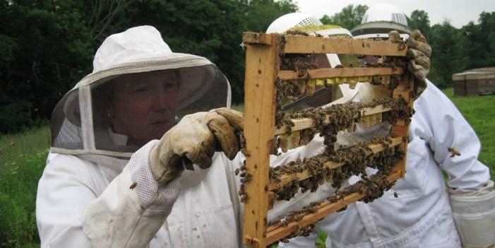 Recomiendan expertos usar miel todos los días