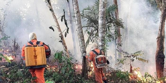 """Incendios en Amazonia son """"una tragedia internacional"""""""