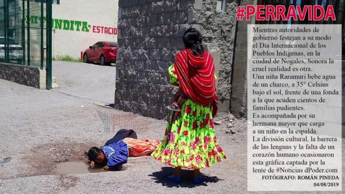 #PERRAVIDA