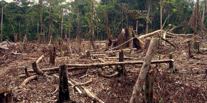 Millones de personas sufrirán escasez de recursos naturales para 2050