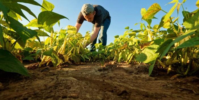 Habrá desabasto de alimentos por cambio climático