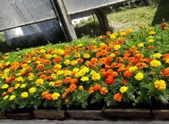 Solidariedade: Apae de PG amplia venda de flores e verduras para quitar despesas mensais