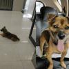 Cão aguarda em frente ao hospital dono que morreu há três meses com Covid-19
