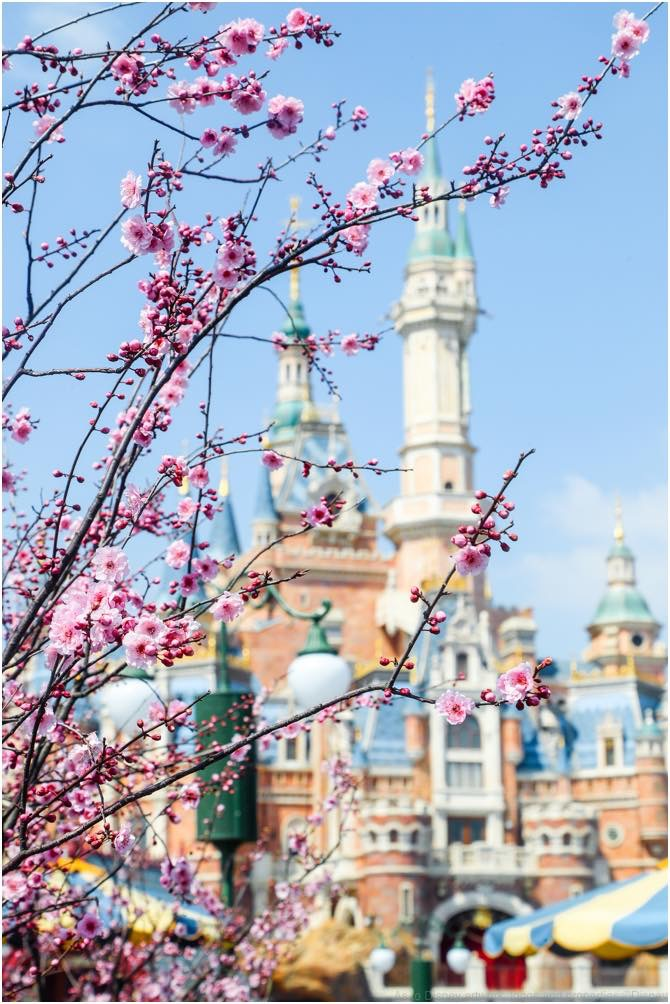 Shanghai Disney Resort Celebrates First Spring Season after Grand Opening (c)Disney
