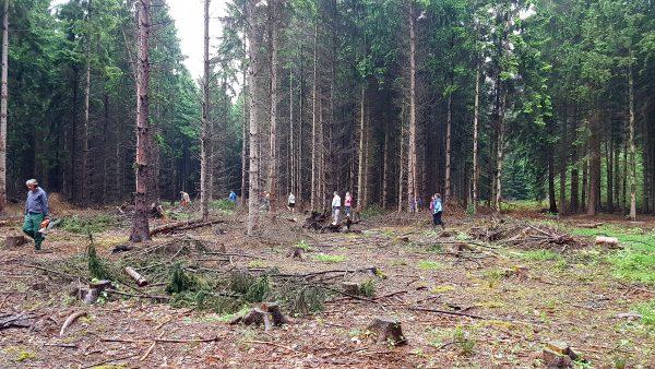 Waldstück bei Morschenich