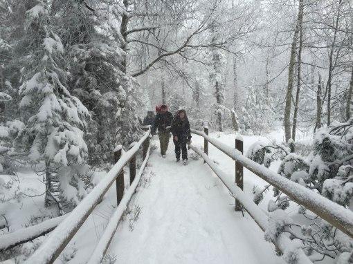 dpsg-sinsheim-rohrbach-2014-winterwanderung-001