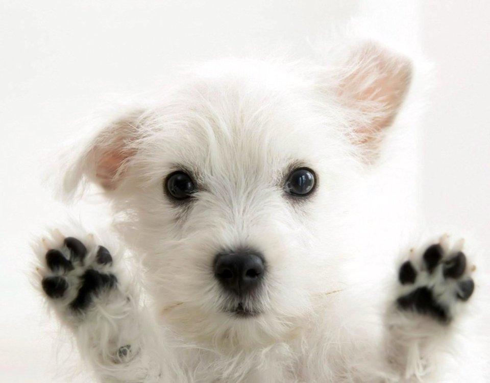 Κομμωτήριο Σκύλων Αργυρούπολη