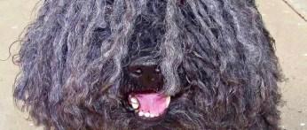A bad hair day!