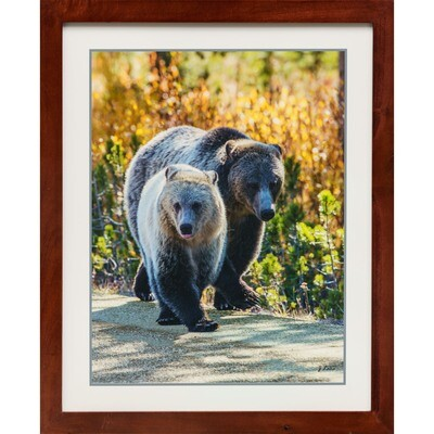 Jeff Lane -- Rose and Snow Silvertip Grizzly Mom and Cub