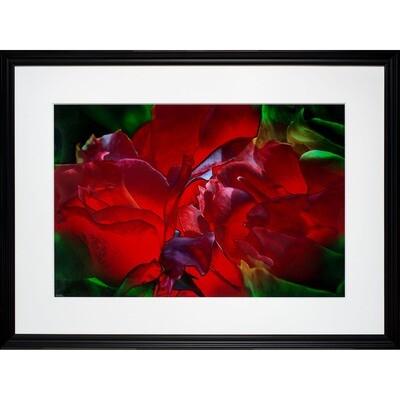 Jean Burnett -- Red Roses