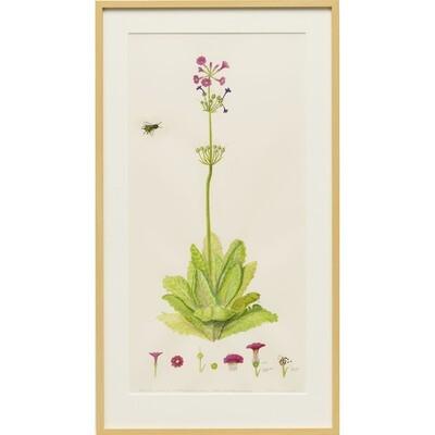 Sylvia Portillo -- Japanese Primrose and Honey Bee