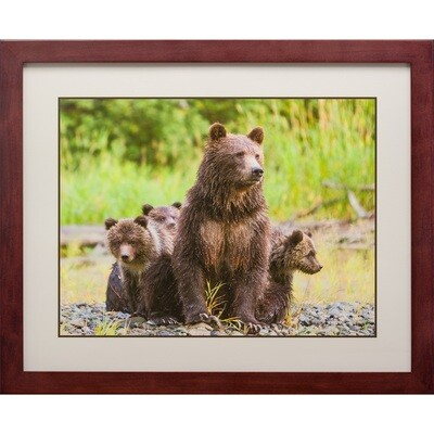Jeff Lane -- Grizzly Bear Mom with Triplets