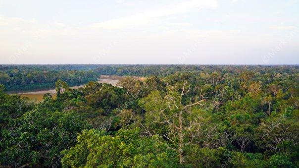 Amazon Rainforest 3 Peru 00034