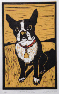 y) Boston Terrier