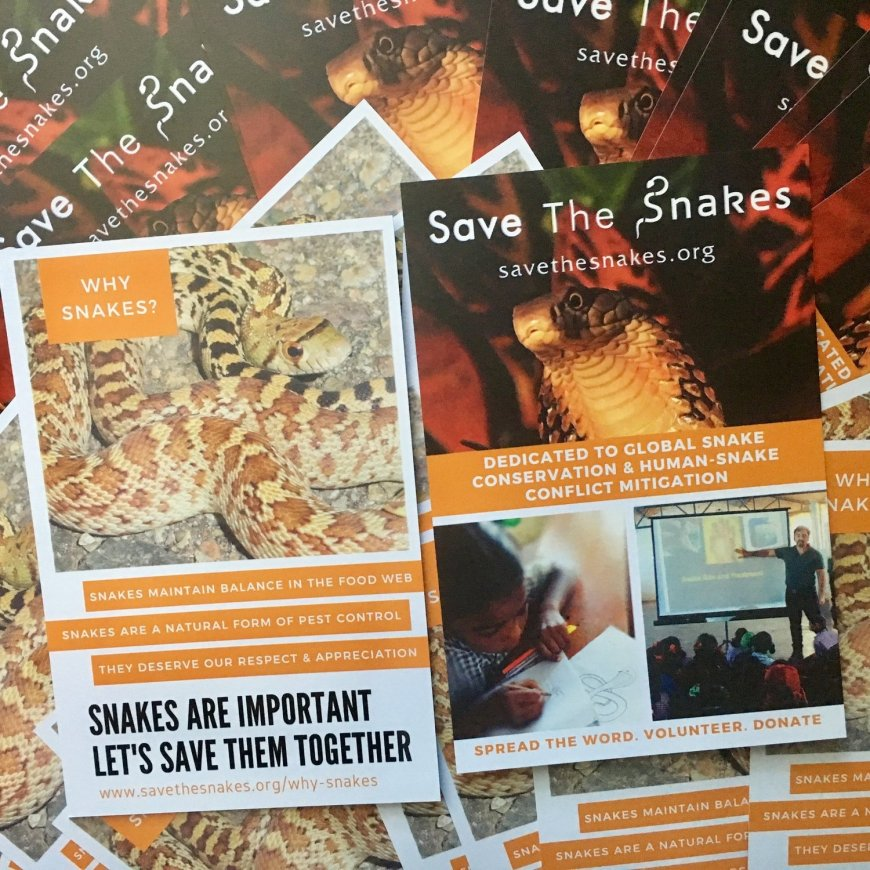 Why Snakes? Information Card