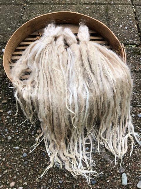 Long Suri Alpaca Locks, 12 Inches, Light Fawn, Mae