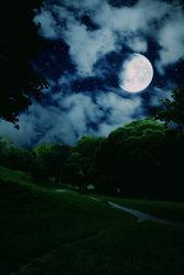 Moonlight Path 00022