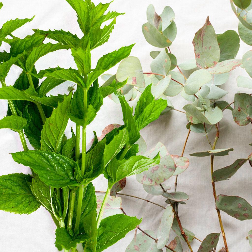 Eucalyptus & Spearmint 00117