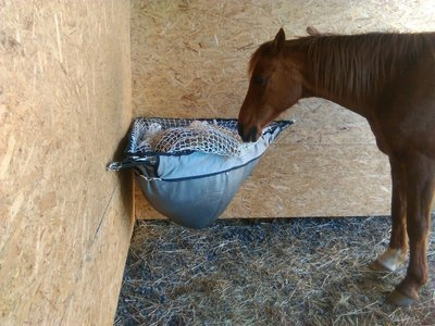 Optimal Horse B-mesh