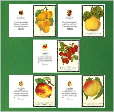 City of Flowers Greeting Cards: Fruits Set # 1