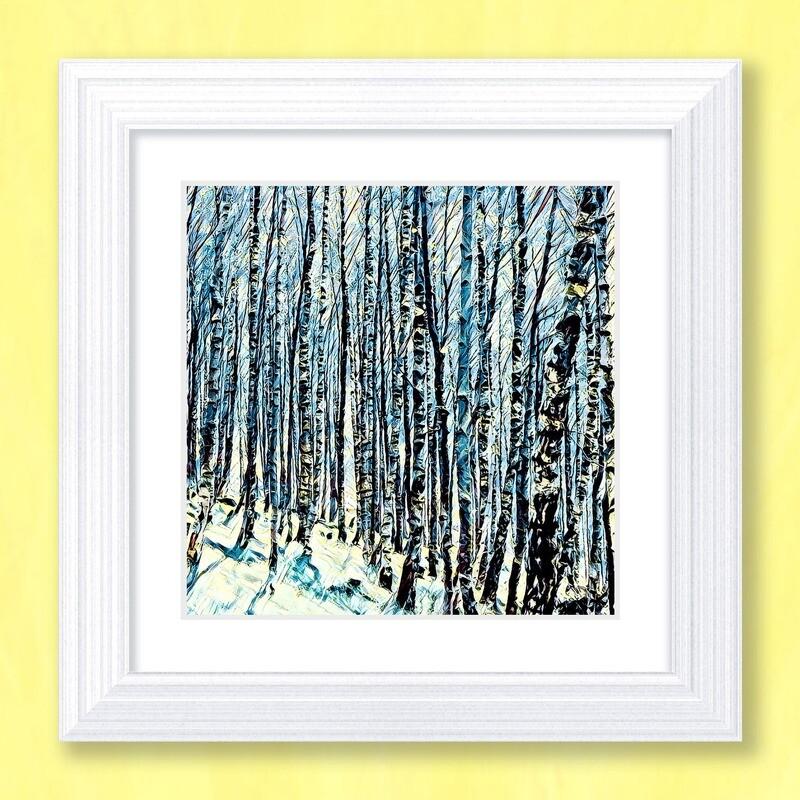 Silver Birches Art Print