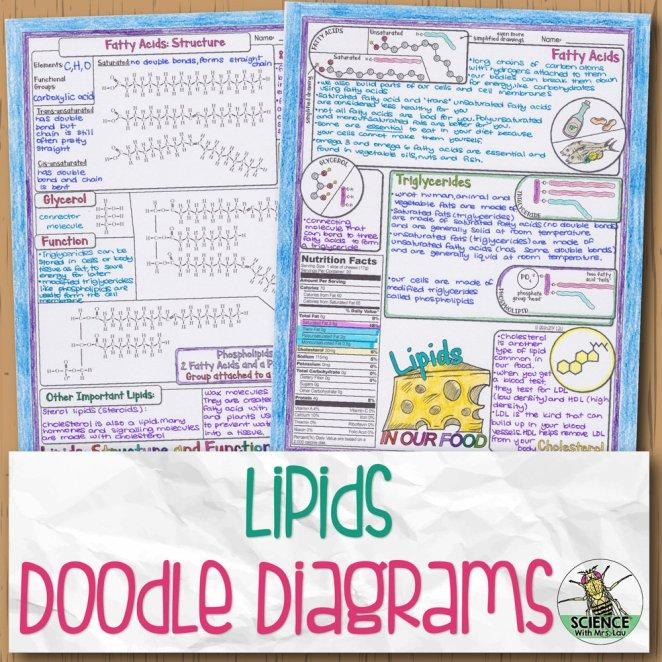 Lipids Doodle Diagrams