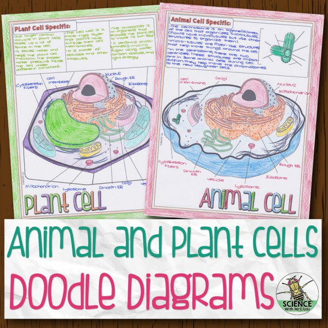 Animal and Plant Cells Doodle Diagrams