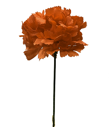 S3000RED - Carnation Pick $16.95 ( Box 100) S3000RED