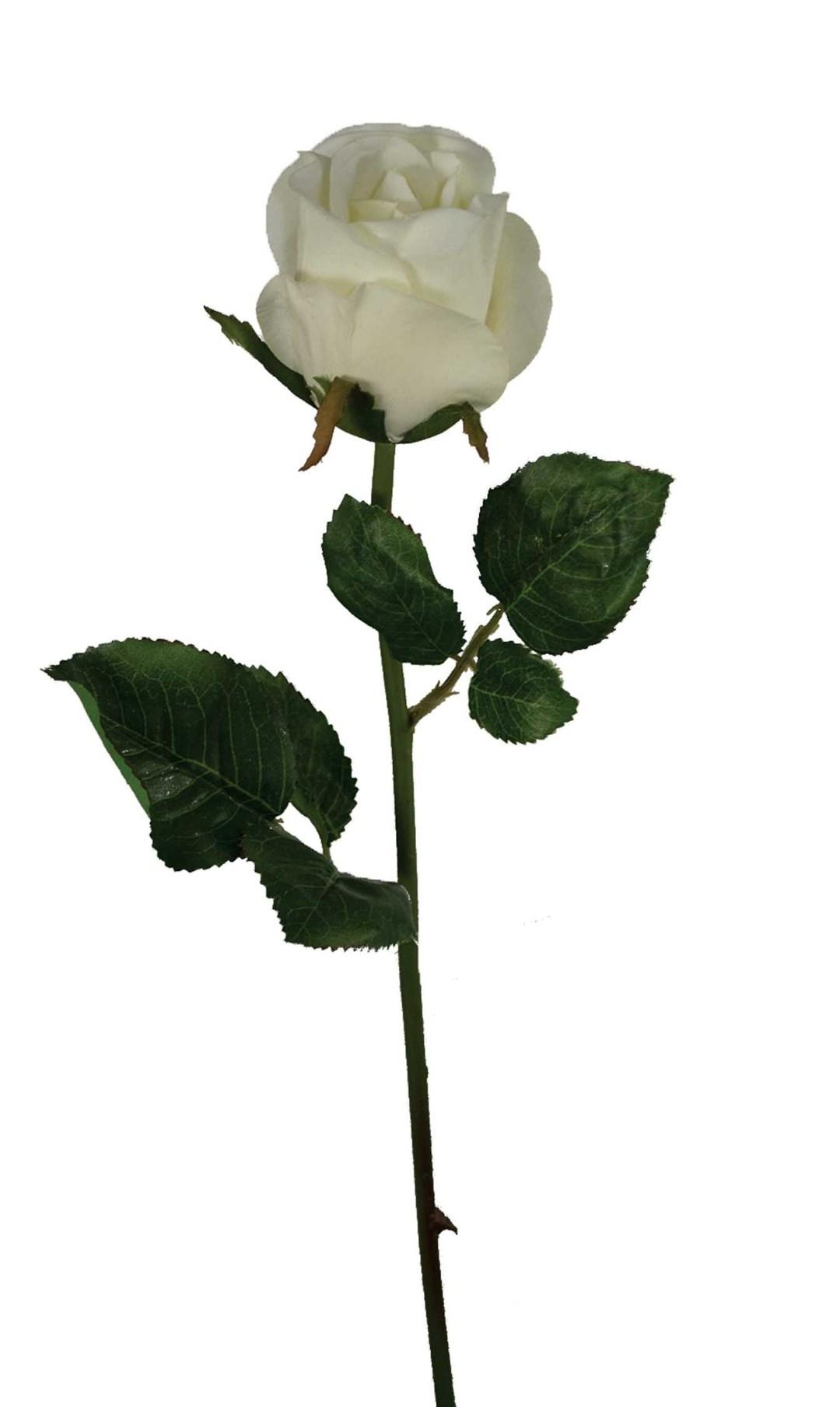 """SS2018WHT - 19"""" Natural White Rose Bud $18.50 a Dozen SS2018WHT"""