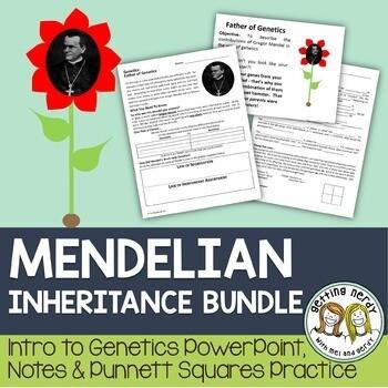 Punnett Squares - Mendel and Inheritance