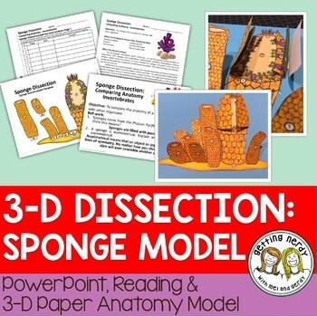 Sponge Paper Dissection - Scienstructable 3D Dissection Model