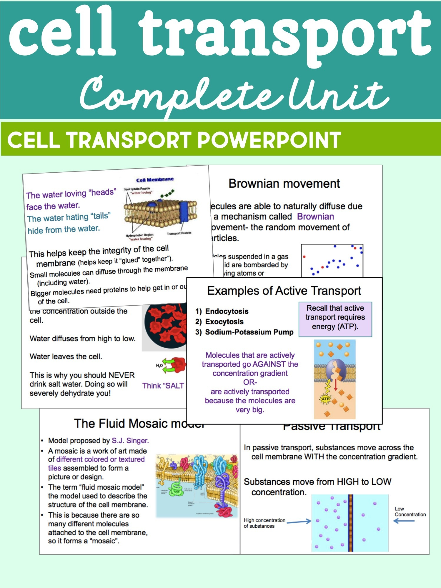 Active Transport Coloring Exocytosis Worksheet Answers