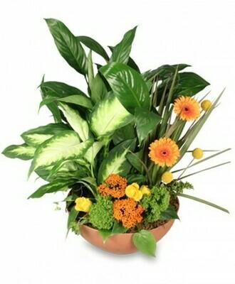 Botanical Blooming Garden