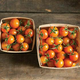 Sungold Tomato Plant