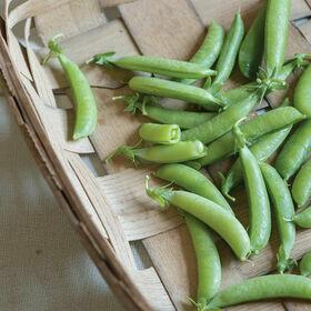 Snap Peas Vegetable Plant
