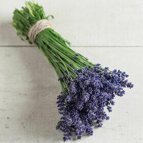Lavender 'Phenomenal' Herb Plant