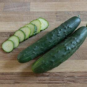 Slicing Cucumber Plant