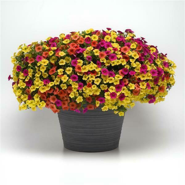 Tropicali for sun (color bowl)