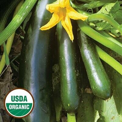 Seed Packet-Black Beauty Zucchini