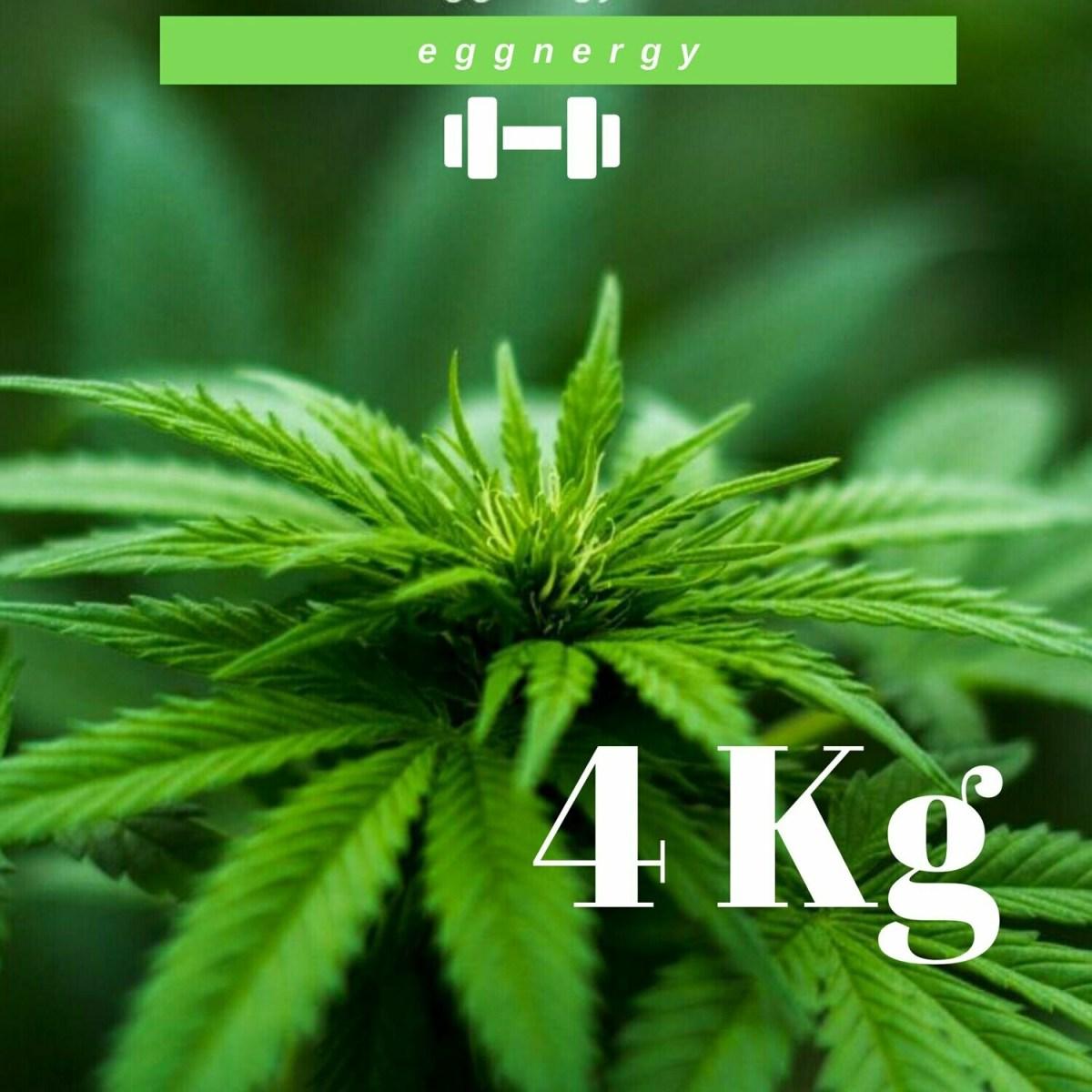 Protéines de chanvre bio (Nature) en 4 x 1 kg