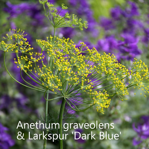 Larkspur Dark Blue & Dill 00132