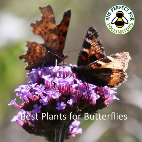 Butterfly Garden Seed Collection 00266