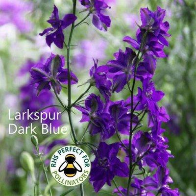 Larkspur 'Dark Blue'