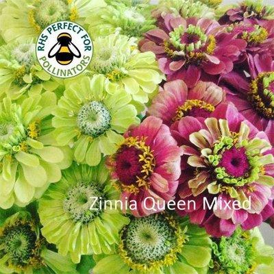 Zinnia elegans Queen Mix