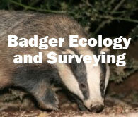 Badger Ecology and Surveying (Exeter): 24th March 2020