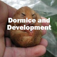 Dormice and Development (Tiverton): Tuesday 18th February 2020