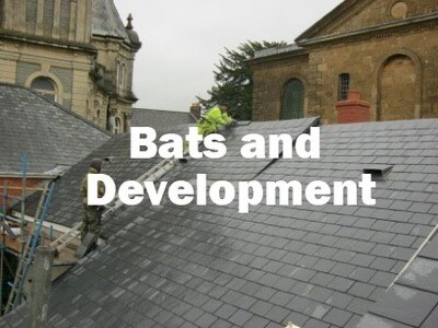 Bats and Development (Tiverton, Devon): 25th September 2019