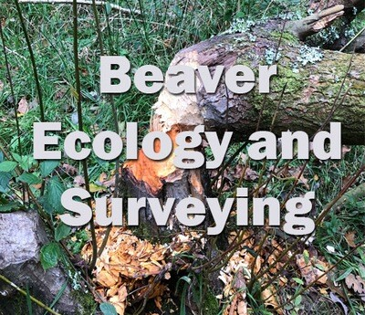 Beaver Ecology and Surveying (Devon) 11th February 2020